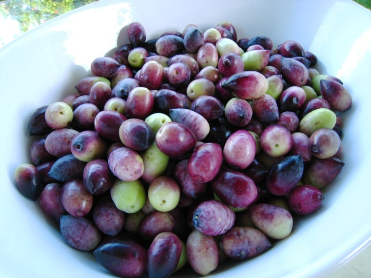 a bowlful of olives
