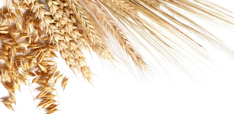 Казахстану следует сосредоточиться на южном направлении транспортировки зерна