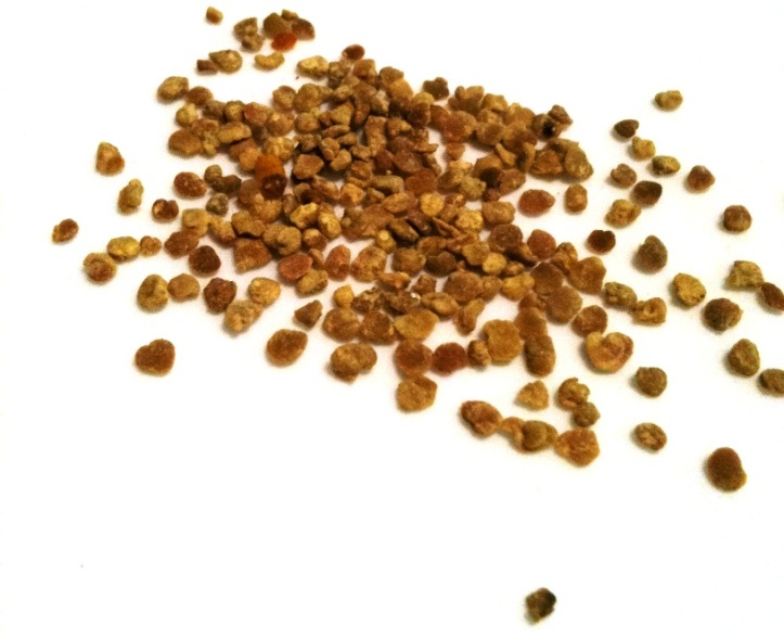 bee pollen: up close & personal