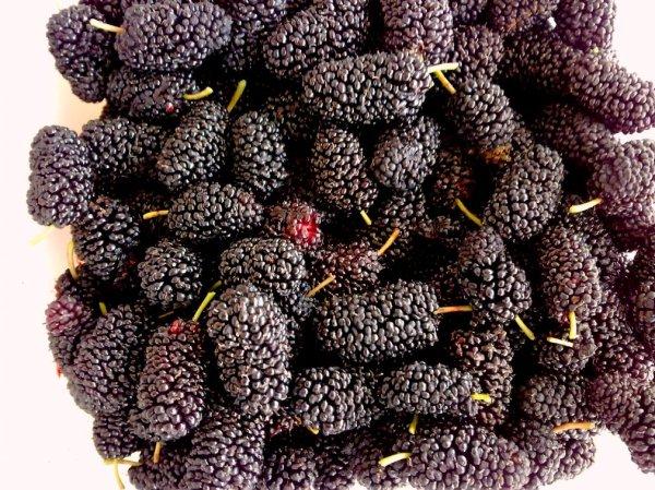 yummy mulberries