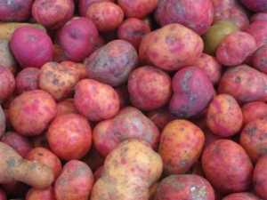 vibrant potatoes